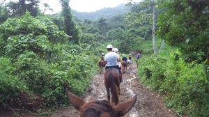 Horseback Riding in Jamaica