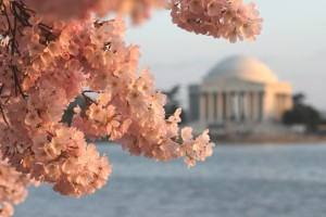 National Cherry Blossom Festival in D.C.