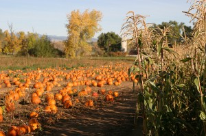 Lehigh Valley PA: Activities for Fall Family Travel