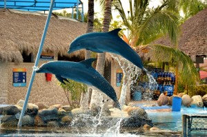 Puerto Vallarta Dolphin Experience At Dolphin Discovery