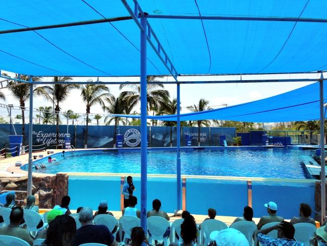 Puerto Vallarta Dolphin Experience