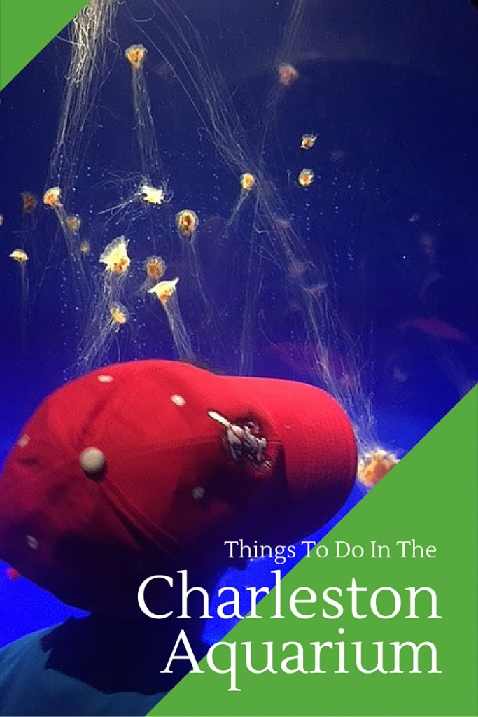Things To Do In the Charleston Aquarium