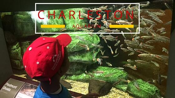 Charleston aquarium with children