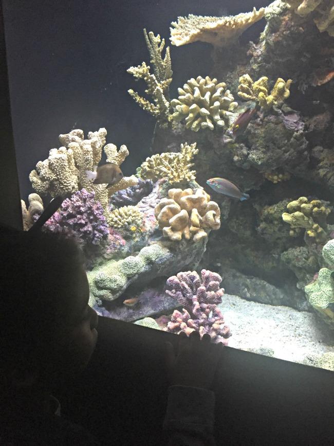Baltimore aquarium reef