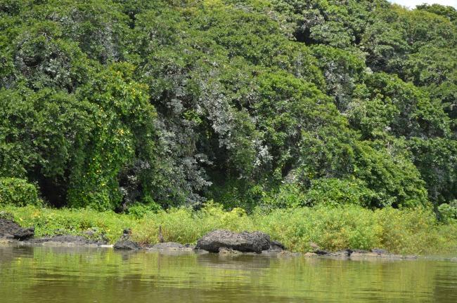 NicaraguaArchipelagosWildlife
