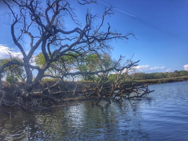 Trees_Kayaking In Charleston SC