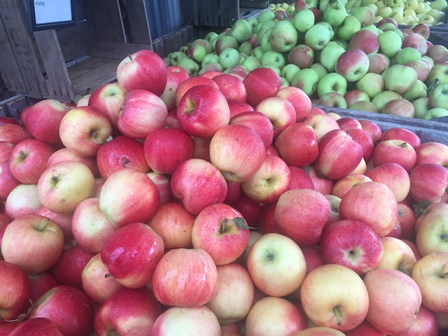 Apples in winchester